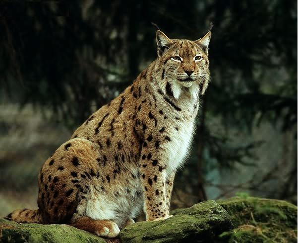 Práve si prezeráte obrázky z kategórie: Fauna
